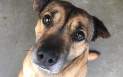 Navigation to Story: Looking Local: National Adopt a Shelter Dog Month